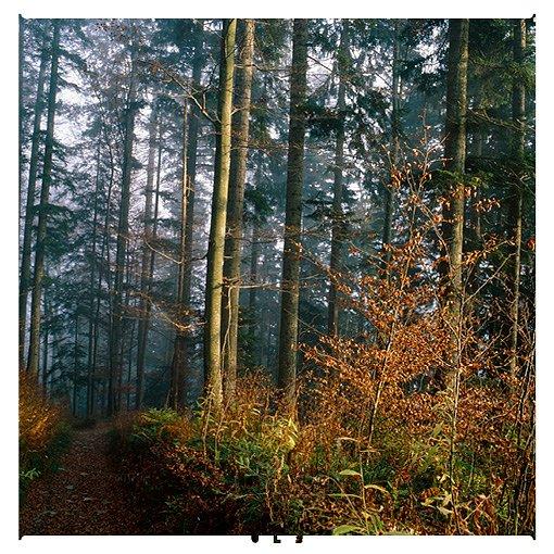 fotos-und-grafiken-180x180mm12.jpg